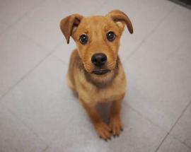 犬の「しつけ」と「トレーニング」の違い