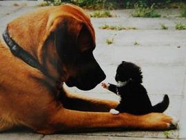 飼い主と愛犬との主従関係の意味って??