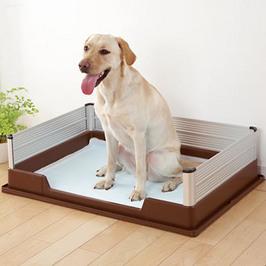 犬のトイレしつけの間違い!?