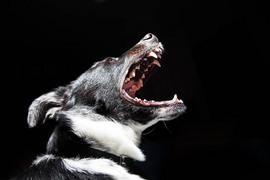 犬の無駄吠えの正しい対処法について