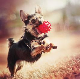 犬にはおもちゃを与えっぱなしにしない