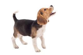 お留守番で吠えてしまう犬のしつけ方法
