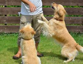 飛びつき癖のある犬のしつけ方法